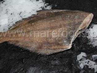 halibut tusza